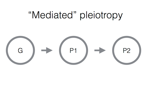 mediated_pl.png